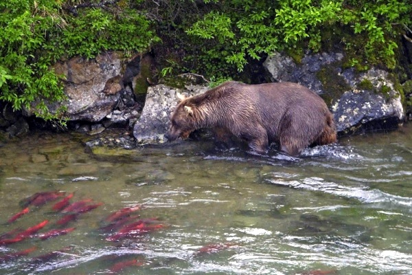 EPA sued over process that could block Pebble Mine in Alaska