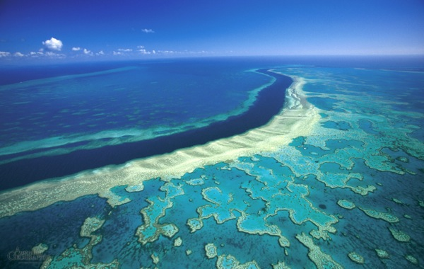 UNESCO to place Great Barrier in high risk list unless Australia steps up protection efforts